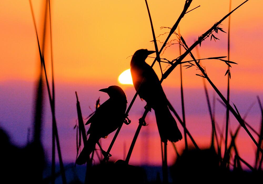Sunset by tomleeman