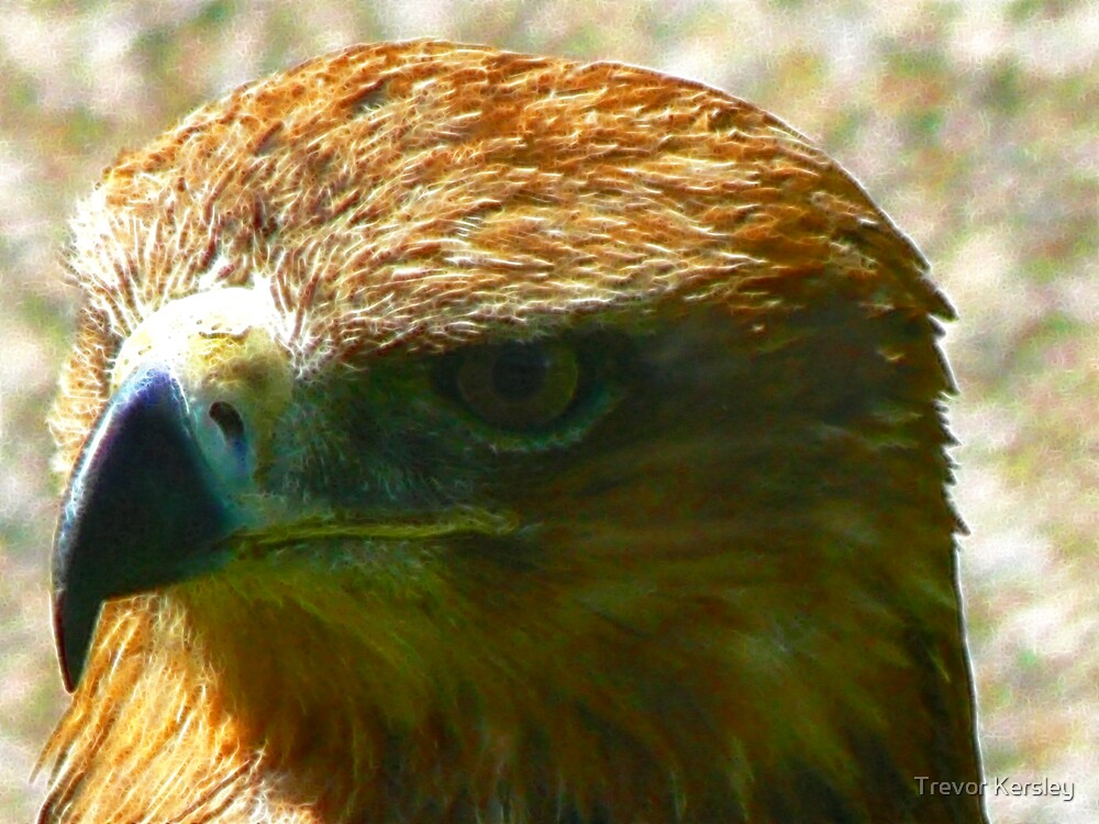 The Beak by Trevor Kersley