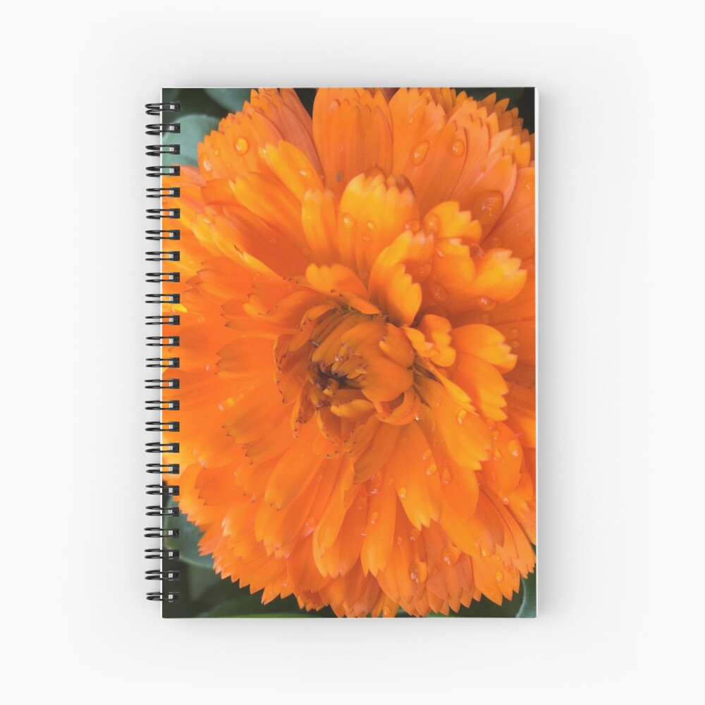 Marigold with Raindrops Spiral Notebook