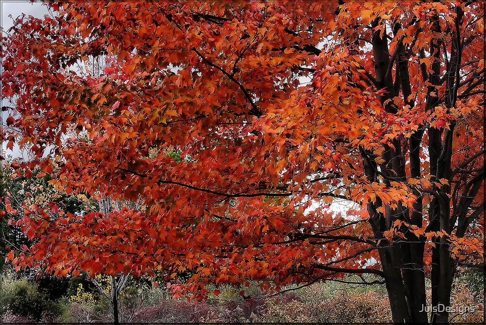 Autumn Framed by JulsDesigns