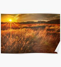 Field of Sunset and Grass Poster