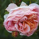 Rose and Promise by Joy Watson