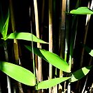 Bamboo View by Margaret Stevens
