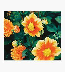 Orange Flowers .- Photographic Print