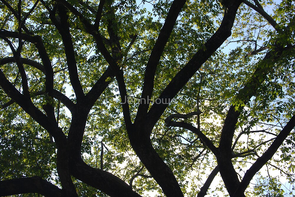 Tangled tree by JennHowe