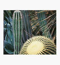 Botanic Gardens _ Cactus  Photographic Print