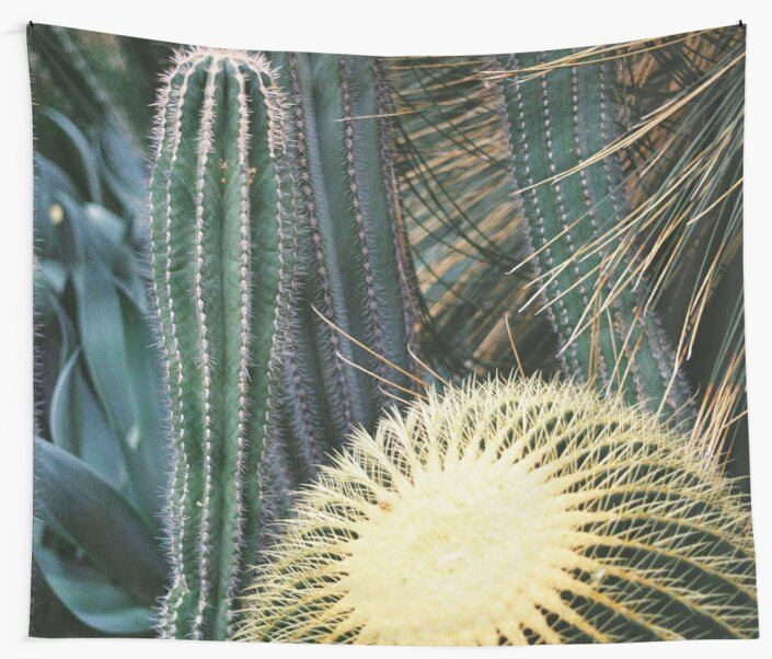 Botanic Gardens _ Cactus  by wwonderworld
