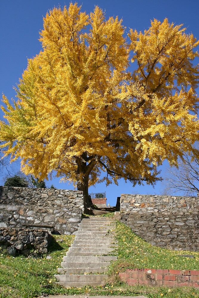 The Ginkgo Tree by Patricia Montgomery