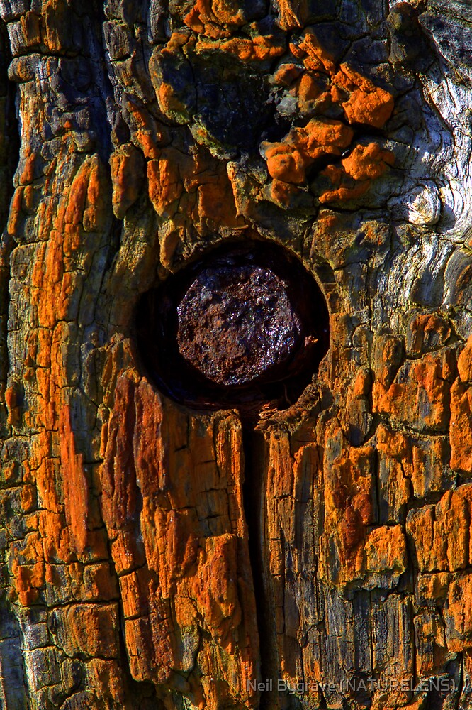 Old Oak and Iron by Neil Bygrave (NATURELENS)