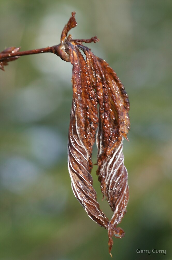 Frosted Leaf by Gerry Curry