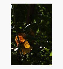 Unique Photographic Print