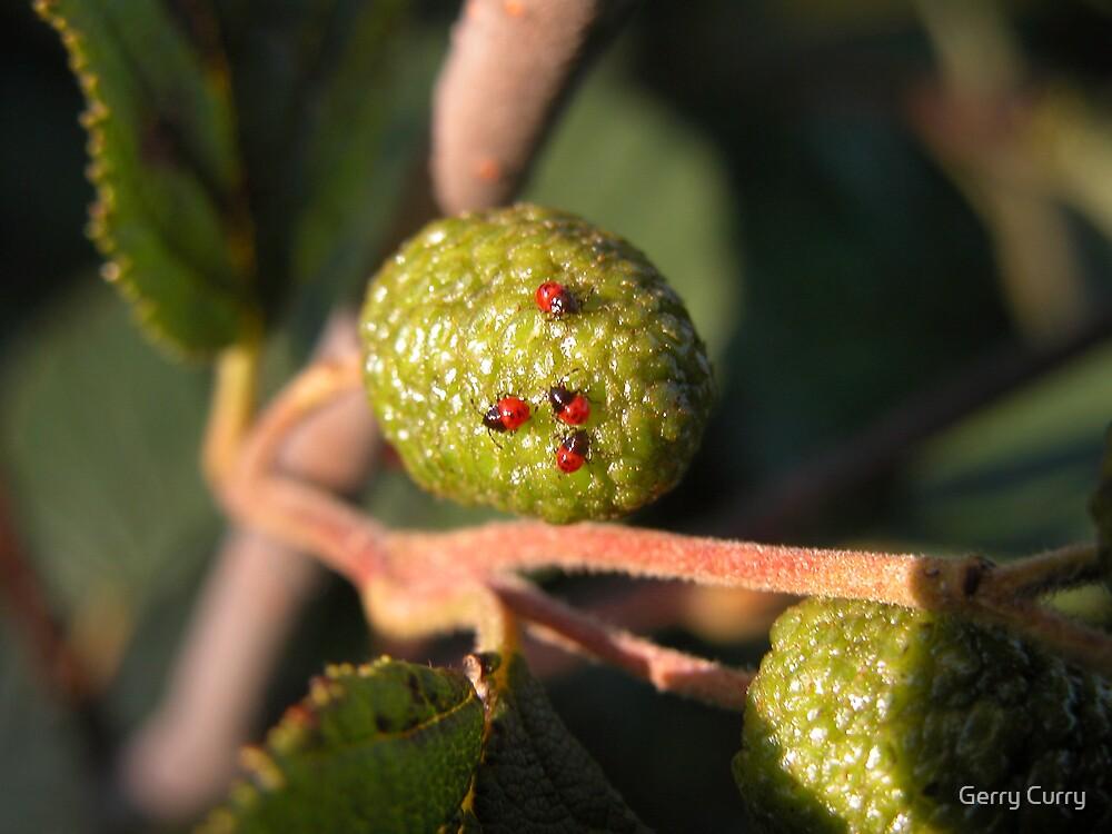 Ladybug Nursery by Gerry Curry