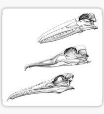 Birds with Teeth Sticker