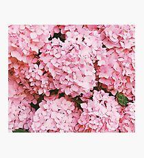 Pink Pattern  Photographic Print