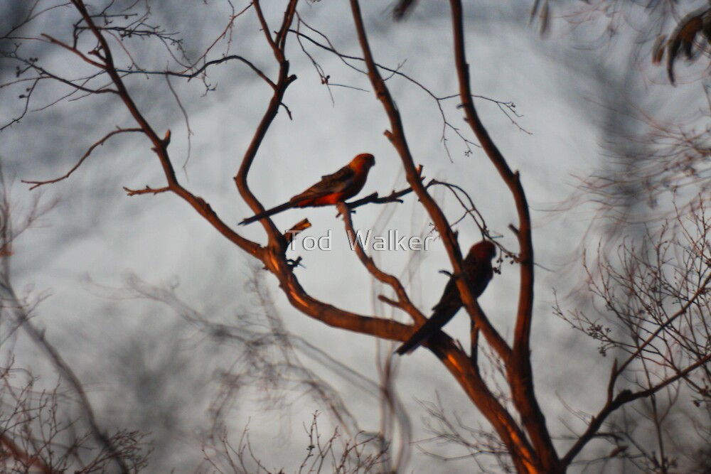 blury birds by Tod  Walker