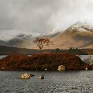 Lone Tree and Dusting of Snow in Mountains of Scotland by John Kelly Photography (UK)