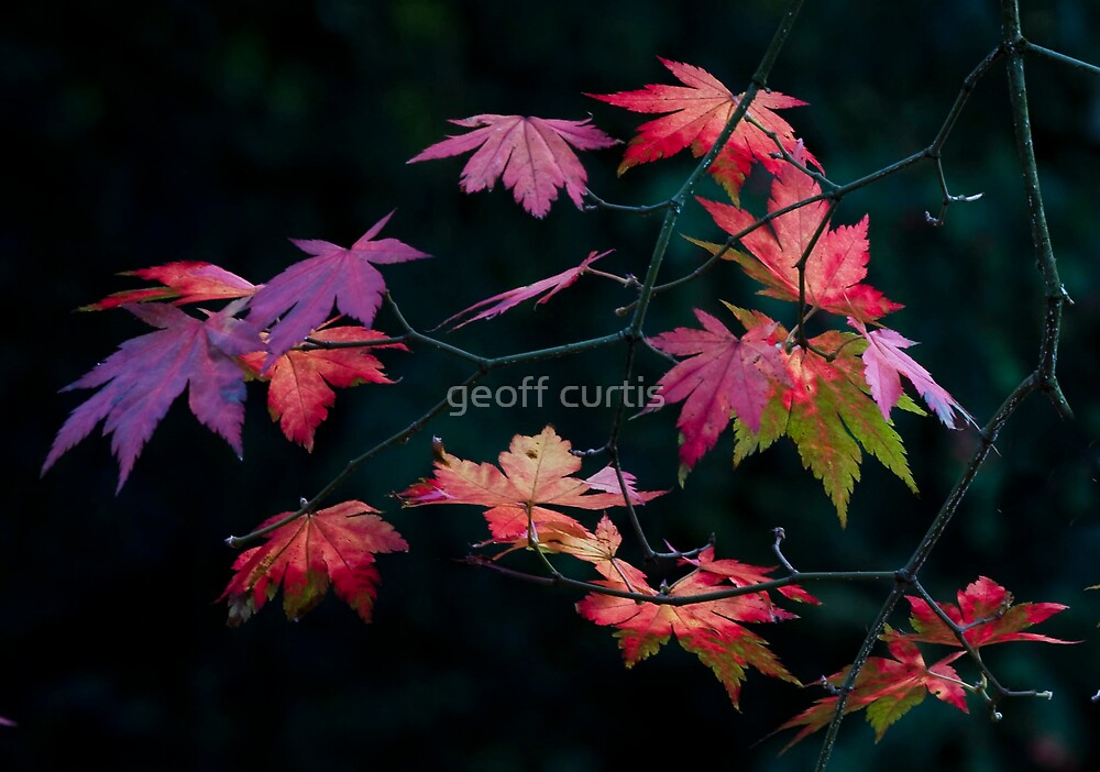 Kaleidoscope of Leaves by geoff curtis
