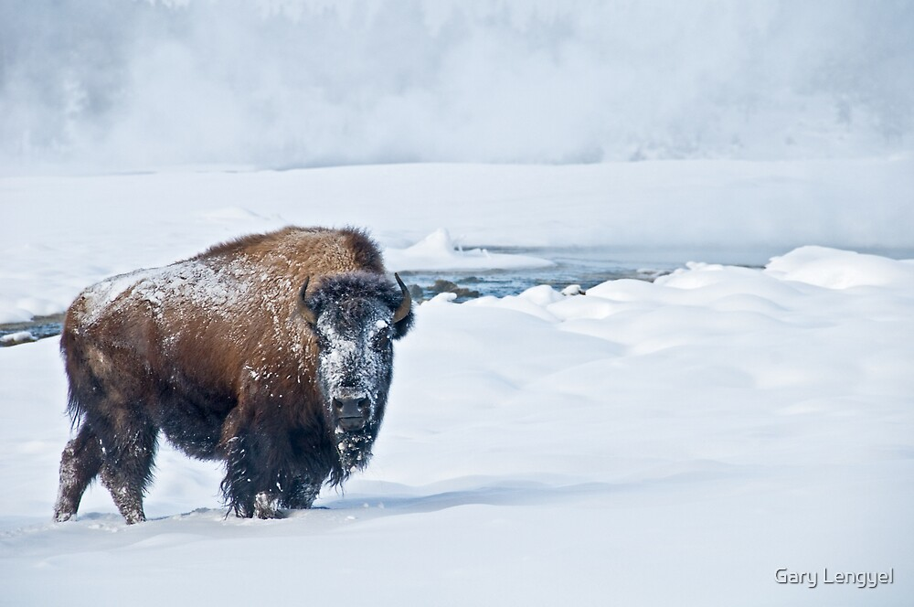 Lone Bison by Gary Lengyel