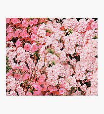 Lollipop Flower Pattern Photographic Print