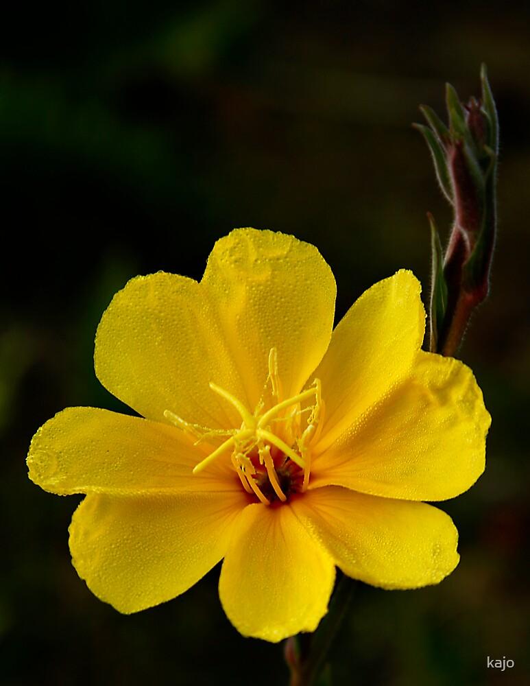 Mellow Yellow by kajo
