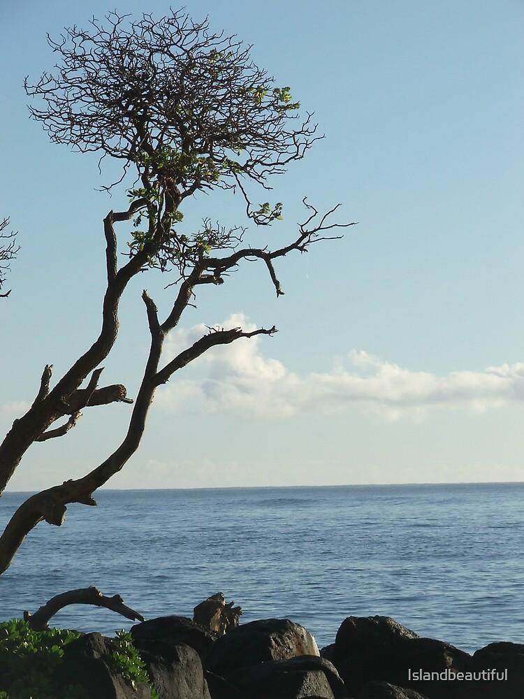 Beach Tree by Islandbeautiful