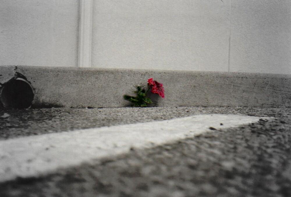 concrete flower by TimothyMicah