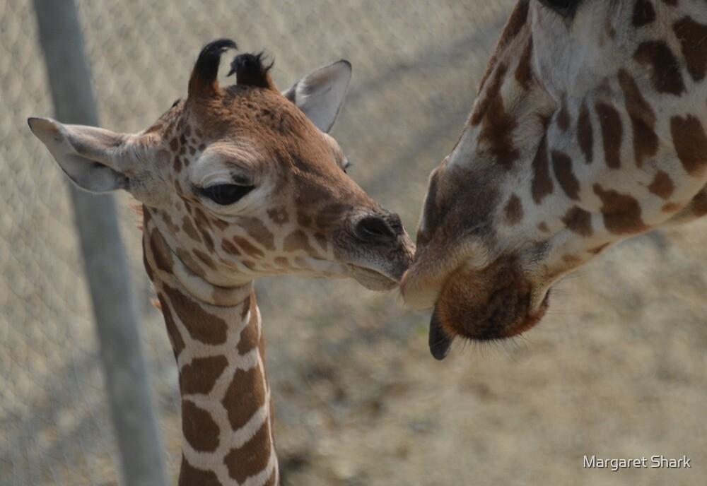 kisses  by Margaret Shark