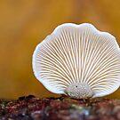 A Fungi Shell by Jo Nijenhuis