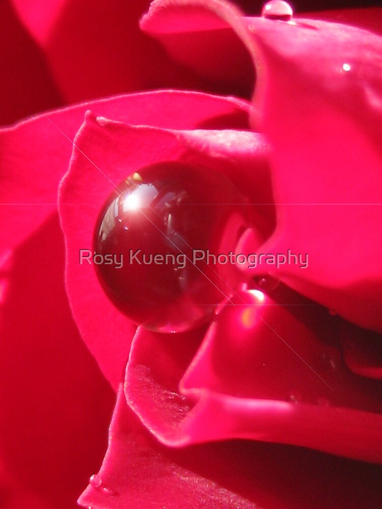 Red Splendor by Rosy Kueng Photography