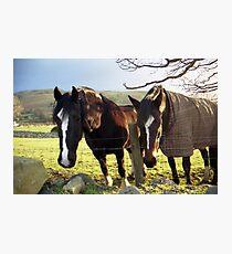 Horses in Llanfairfechan Photographic Print