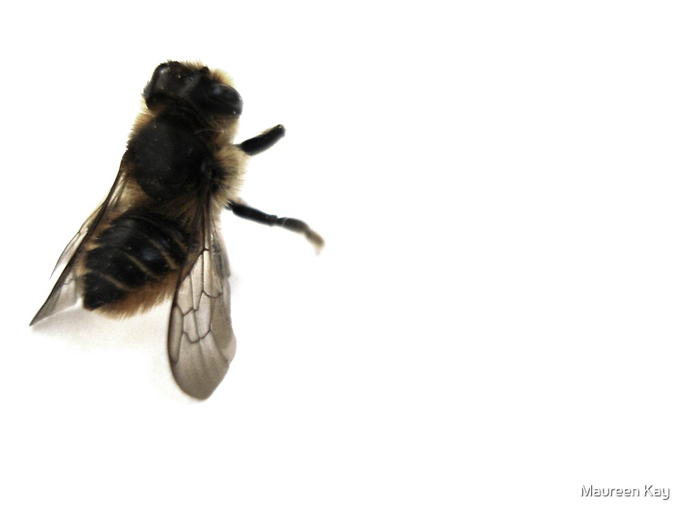 The Bee, Pose 2 by Maureen Kay