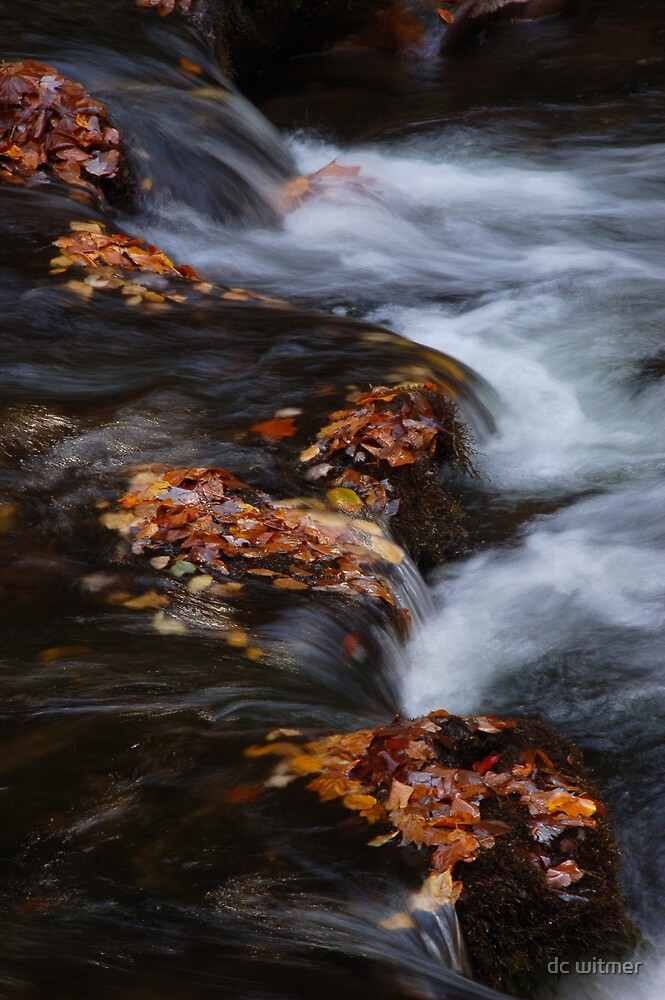 fall over the edge by dc witmer
