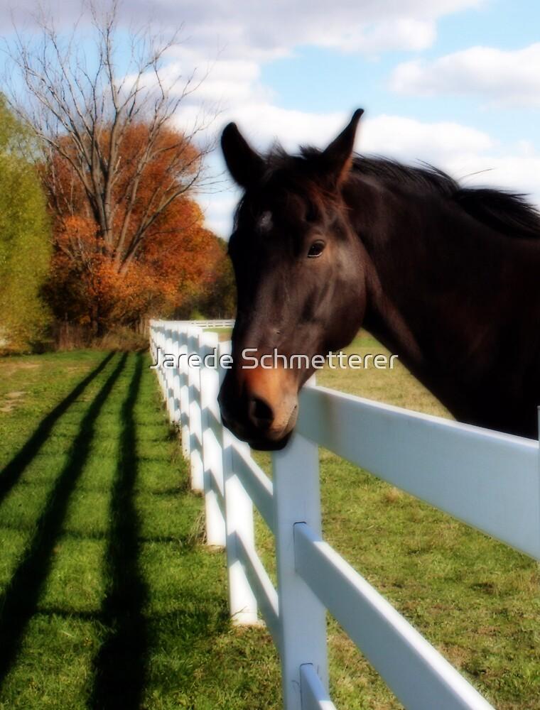 Horse by Jarede Schmetterer