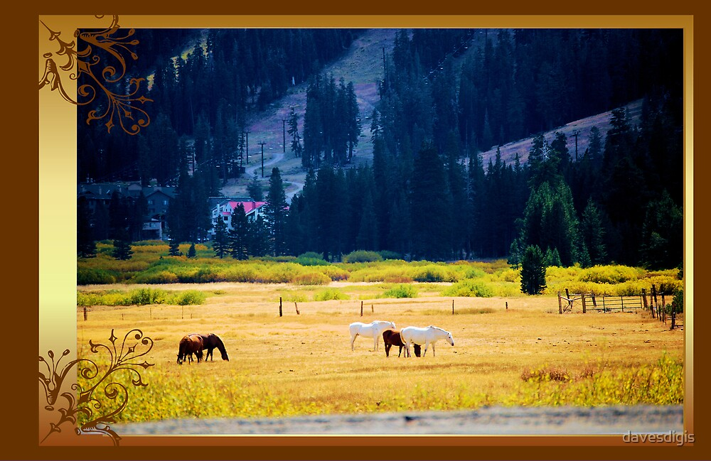 Horse Whispers Meadows by davesdigis