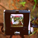 Through the Viewfinder by Shannon Byous Ruddy