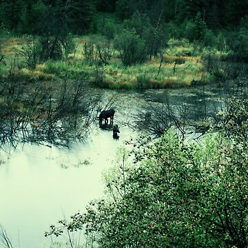 Moose in the Marsh by Gwright313