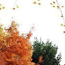 Autumn by pokegirl93