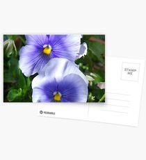 Stiefmütterchen Postkarten