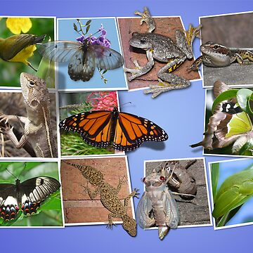 Collage of Australian Native Wildlife, Card by peterstreet