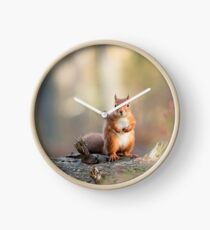 Red Squirrel in Woodland Clock