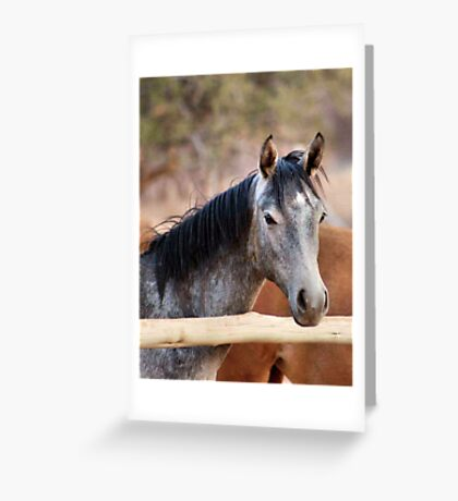 HORSE BEAUTY TWO Greeting Card