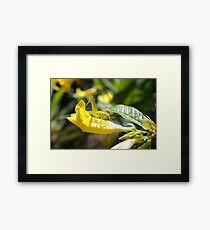 Grasshopper Hiding Framed Print