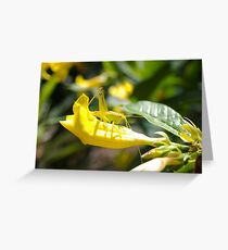 Grasshopper Hiding Greeting Card