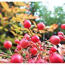 Berries by pokegirl93