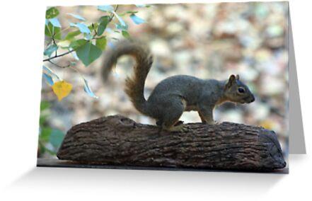 Squirrel on a log by Laura Puglia