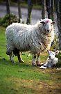 Motherhood by Michael Haslam