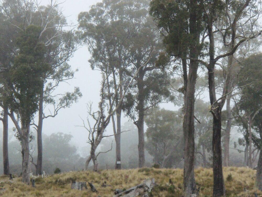 foggy morning scenes in the Tasmanian bush by gaylene