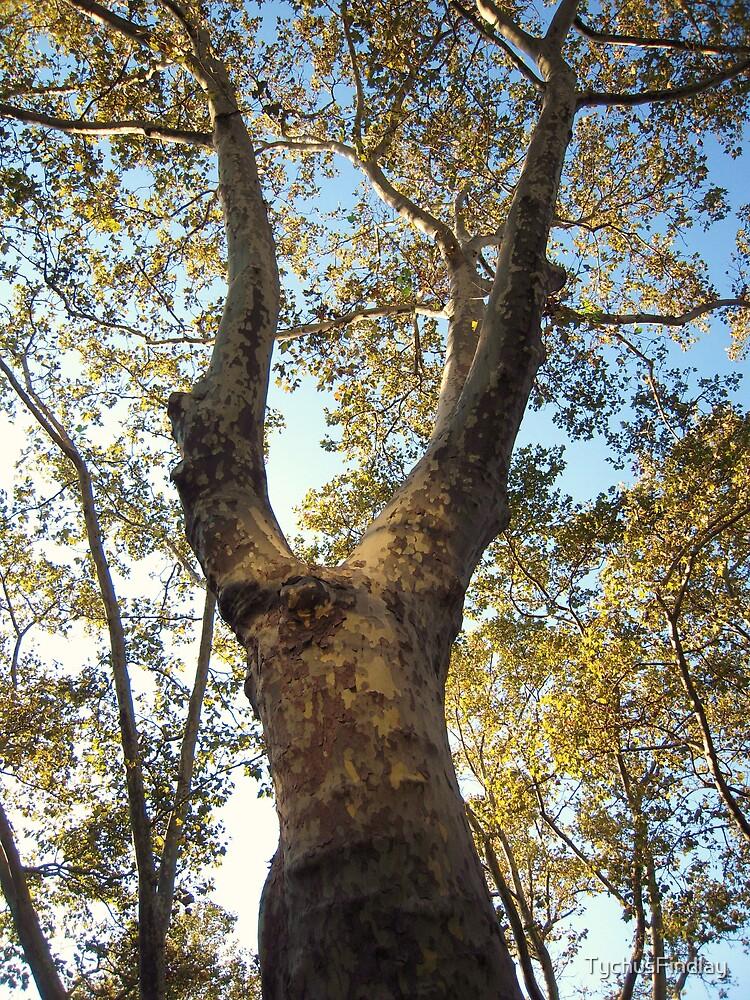 Treefolk by TychusFindlay