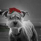 Reindeer Wannabe by Adam Northam