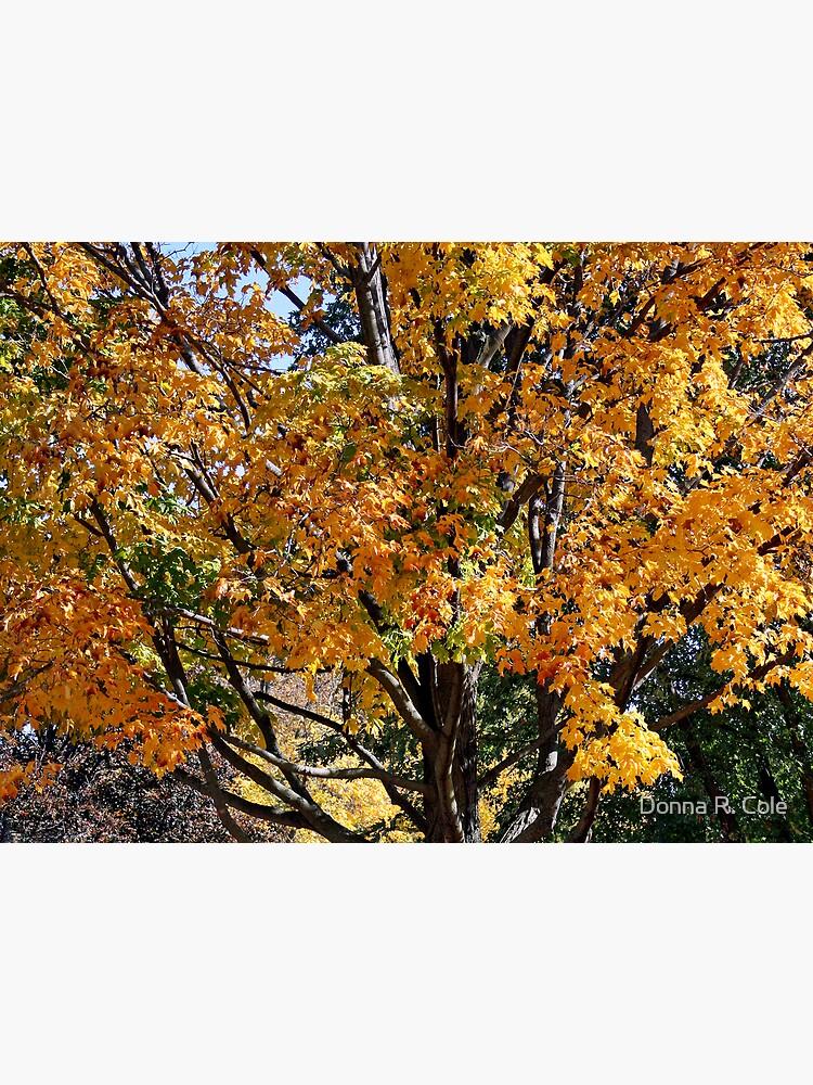 Autumn by alwaysdrc